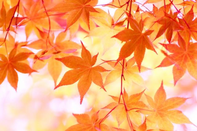 始めるなら「秋」